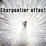 シャンパルティエ効果とは?錯覚の心理を利用した文章表現アップ法