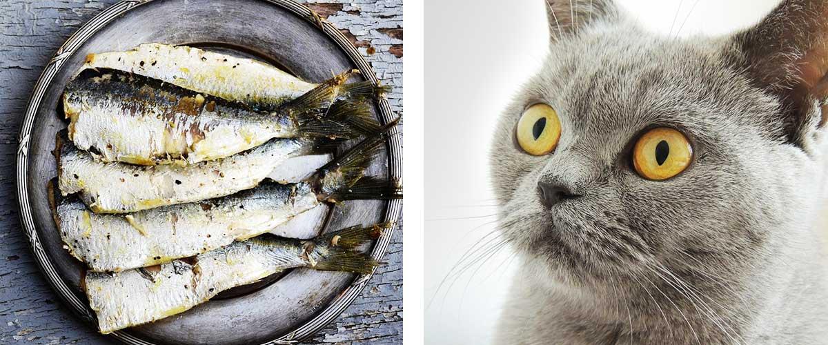 クレショフ効果の例え 魚と猫