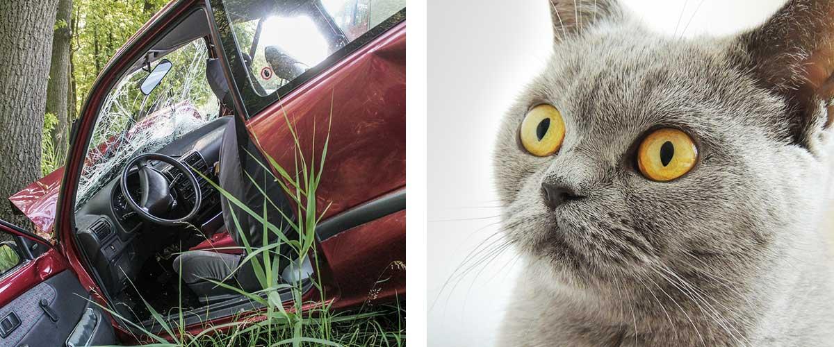 クレショフ効果 事故と猫