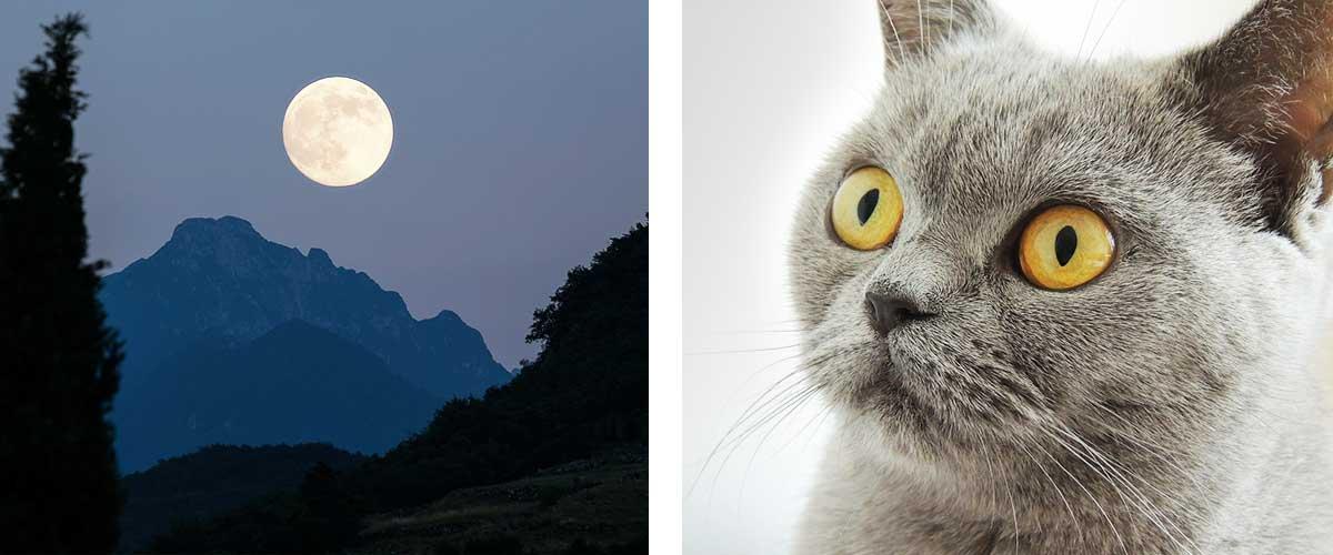 クレショフ効果 月と猫