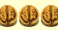 爬虫類脳・哺乳類脳・人間脳|3つの脳の構造でわかる人間の三大欲求