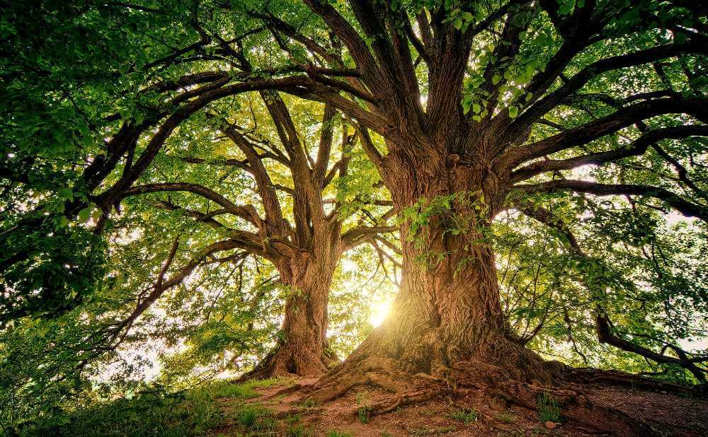 価値観はいつどこで生まれ、どんな環境で育つかで変わる